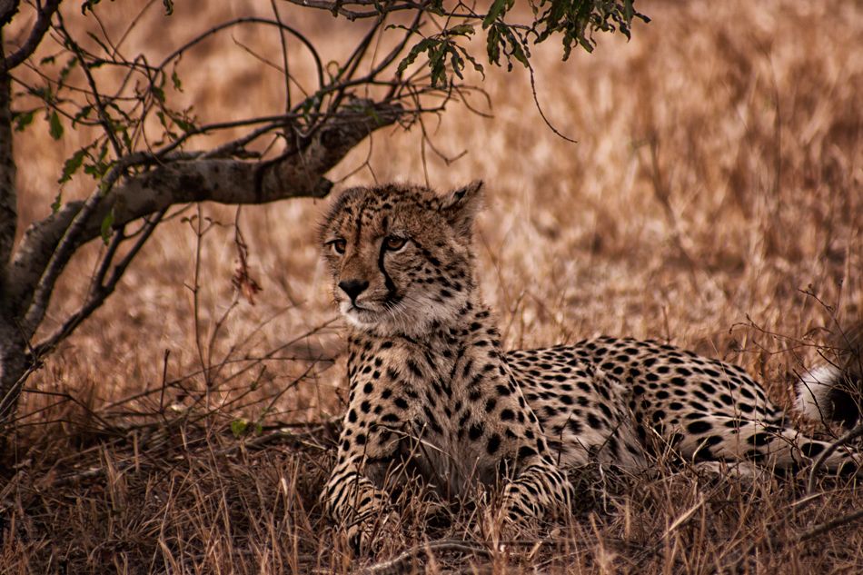 Sabi Sands Game Reserve - South Africa