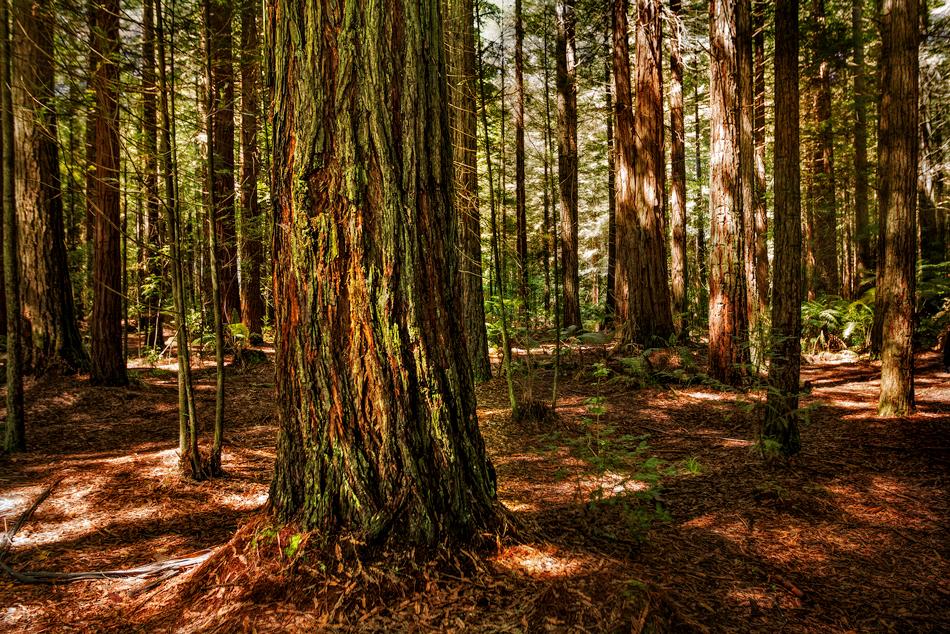 Tauranga-Forest
