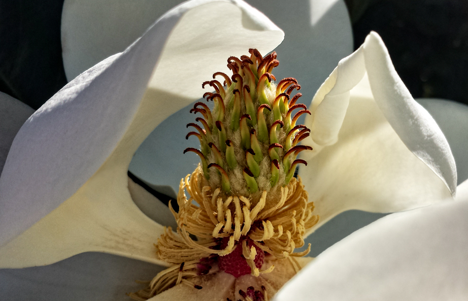 This bloom was bathing in the glow of early morning light.  She knew it suited her.