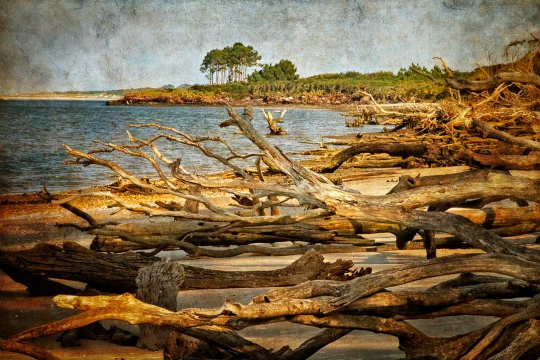 Big Talbot Island III