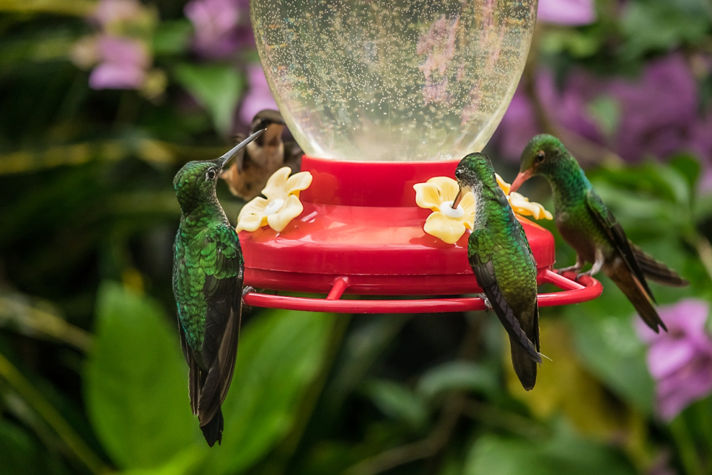 Hummingbird's Paradise